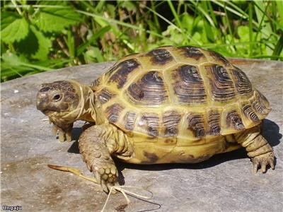 Черепаха особенности содержания